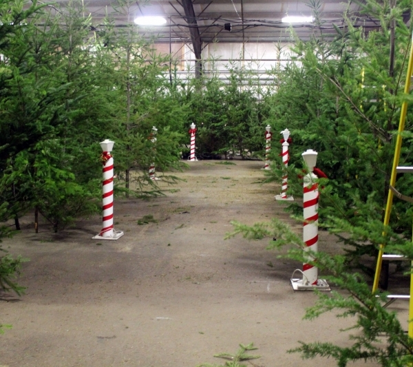 Scenes starting to take shape after trees are set up